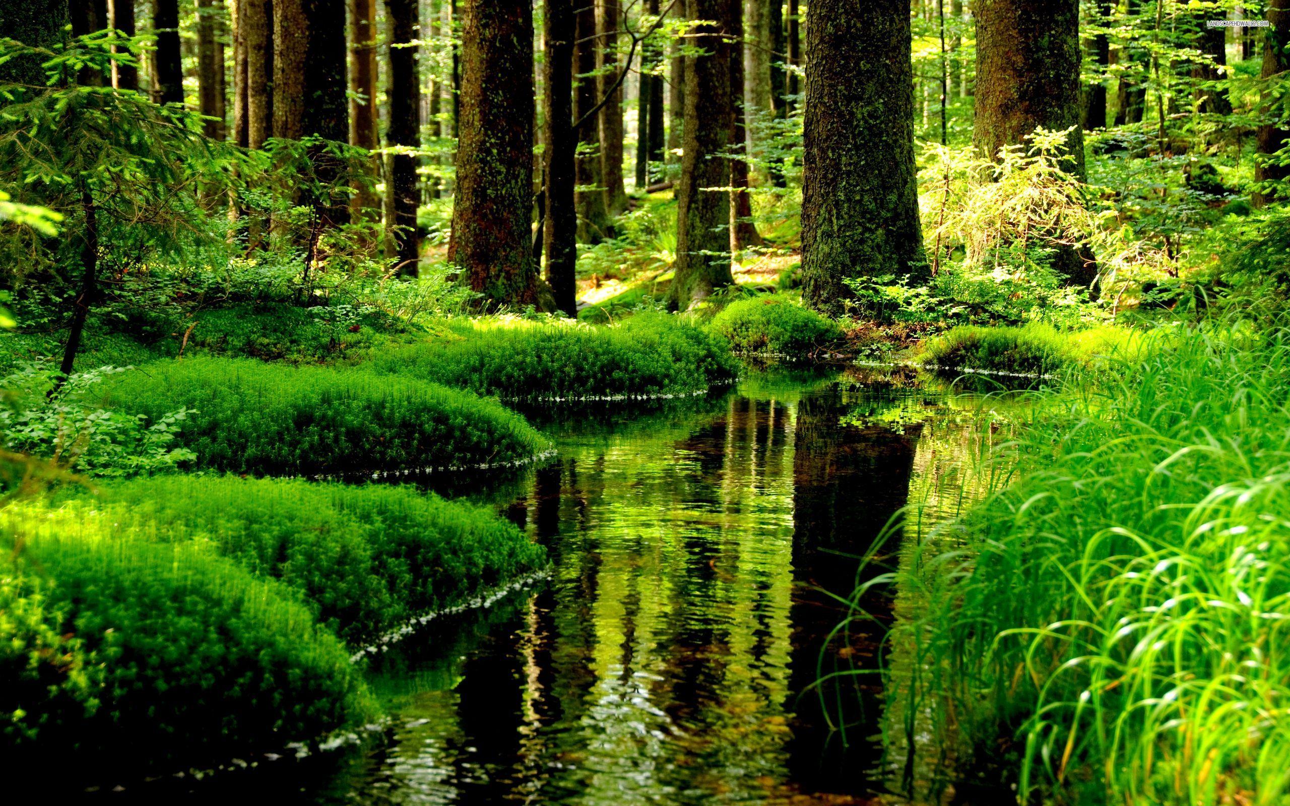 Skog 2